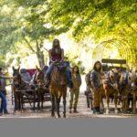 black launches Season 9 of The Walking Dead on FOX